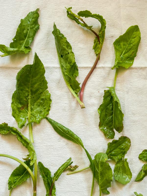Potato Salad with Sorrel Dressing Recipe