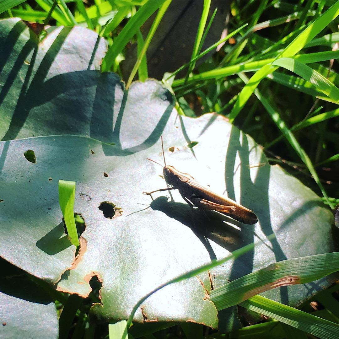 Cricket sunbathing
