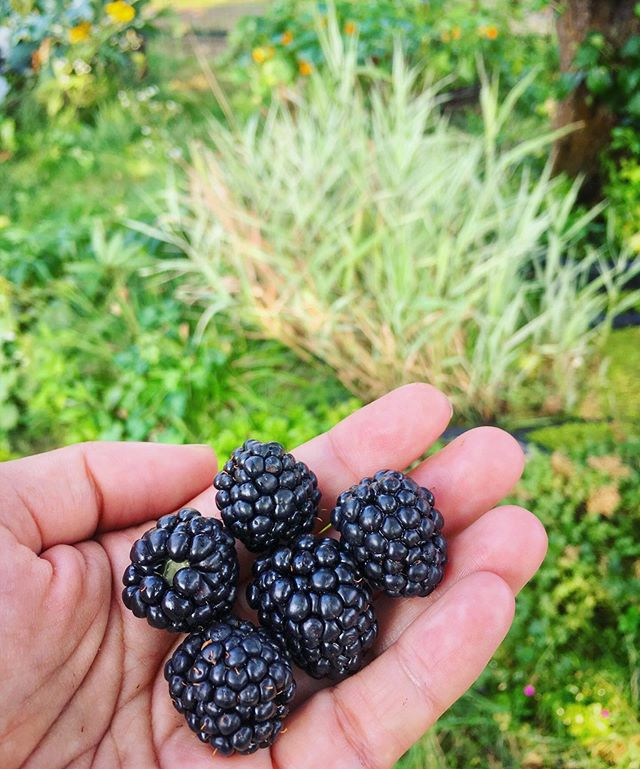 Blackberry high season