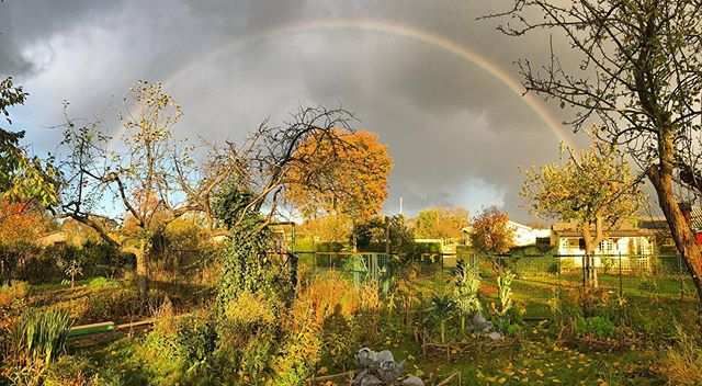 Epic golden hour rainbow #autumngarden