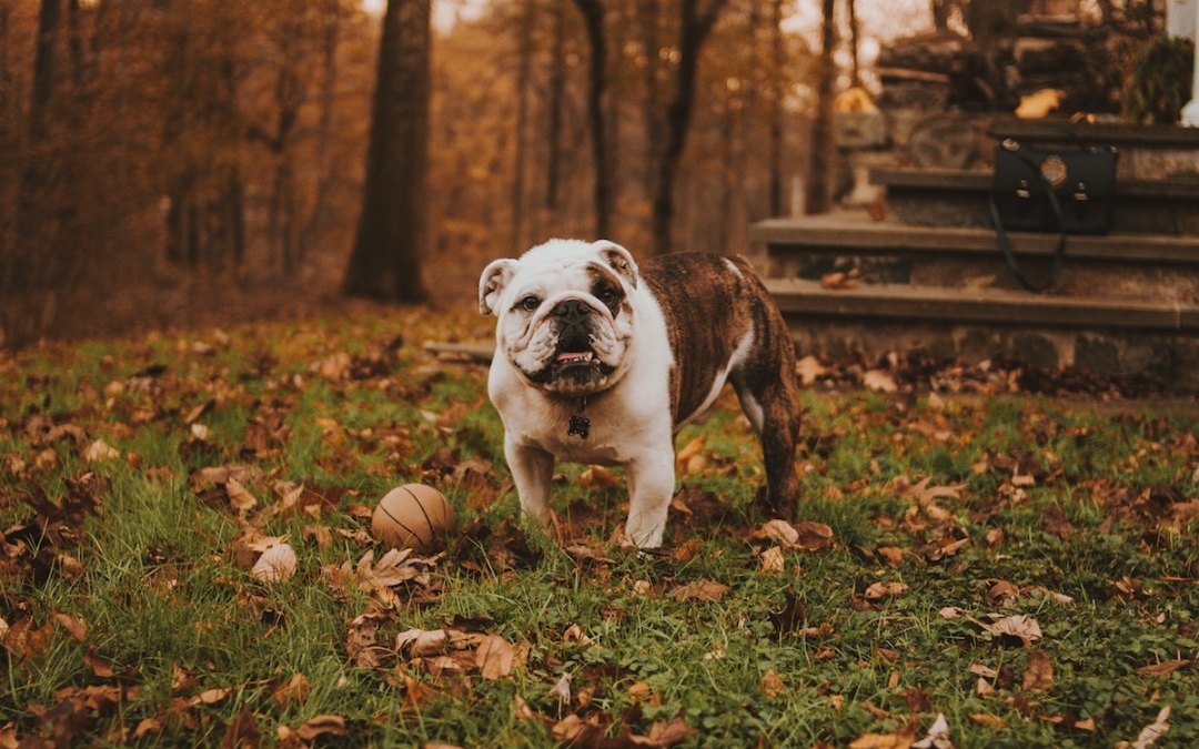 comportamiento-perro