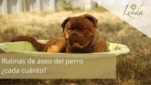 Rutinas de aseo del perro