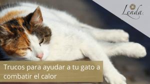 Trucos para ayudar a tu gato a combatir el calor
