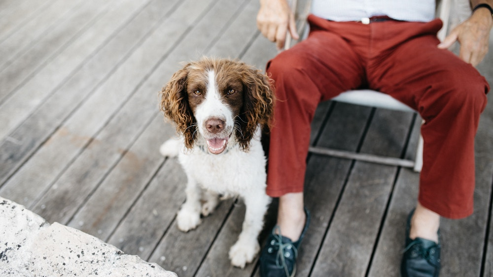 beneficios-mascota-mayores