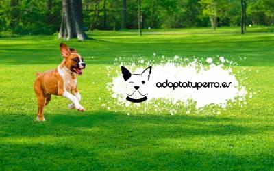 Adoptar a una mascota es mucho más sencillo con adoptatuperro.es