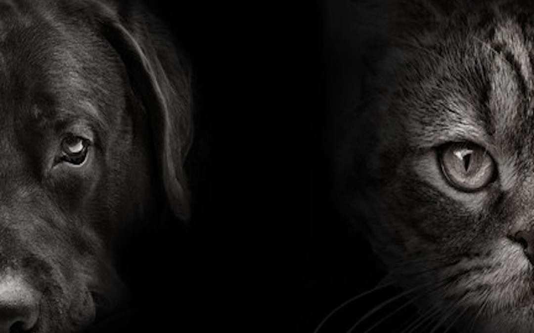 Como ven los perros y gatos Lenda