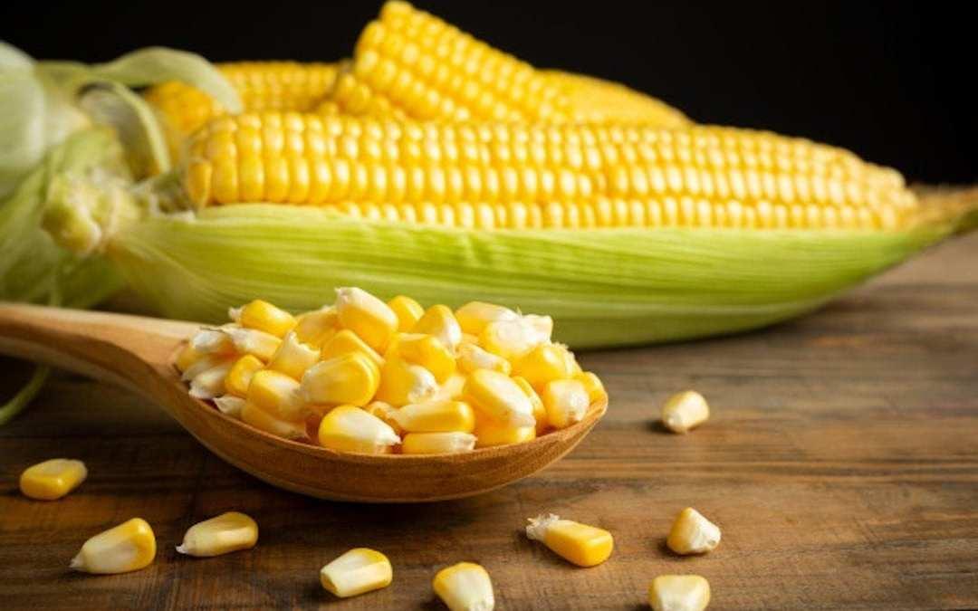 mito maiz