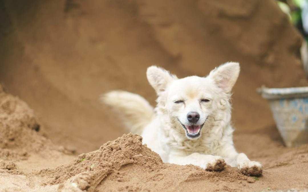 Perro excavando