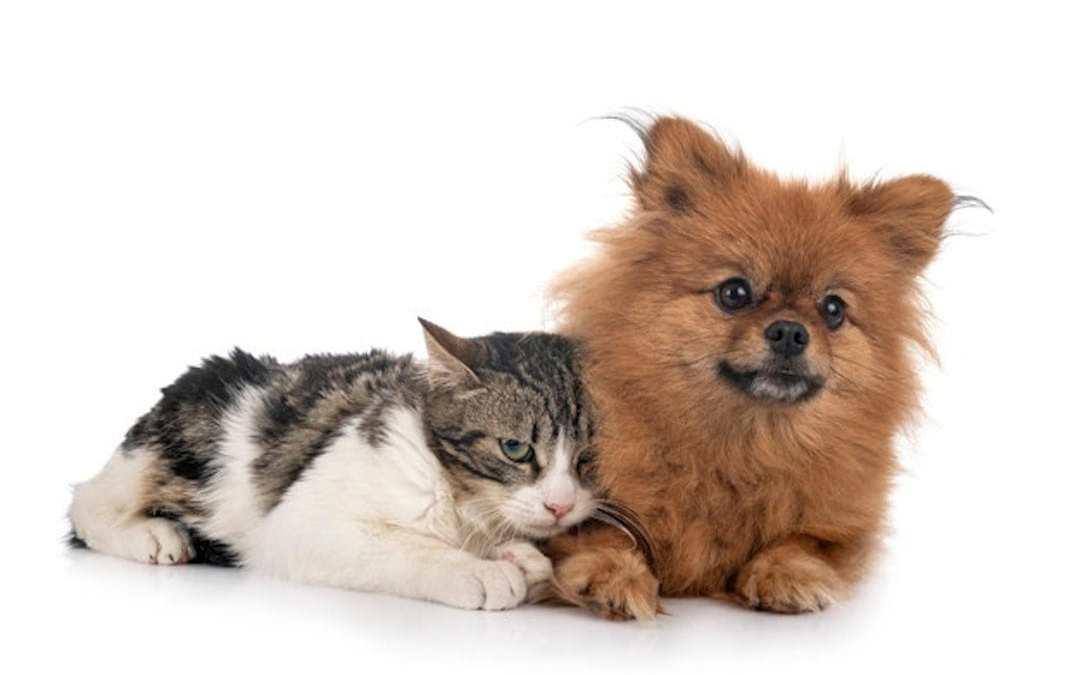 Gente de perros y gente de gatos,
