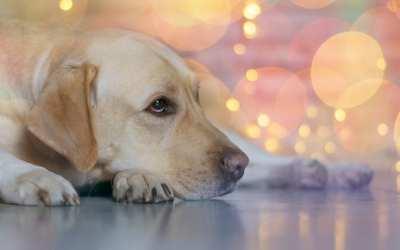 ¿Cómo sé si mi perro está estresado?