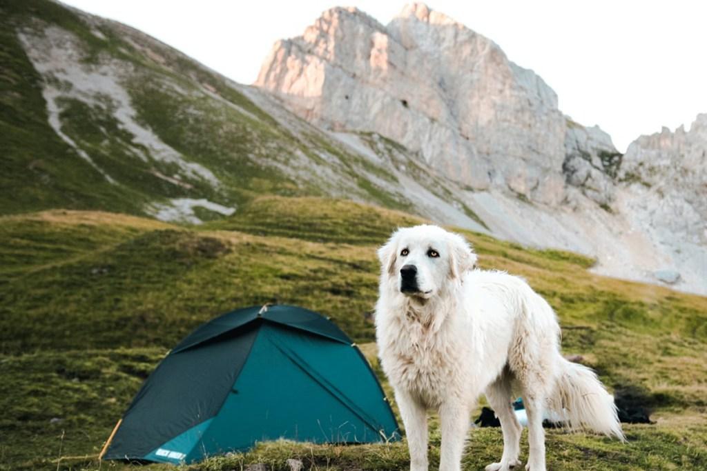 10 planes para hacer con tu perro antes de que acabe el verano