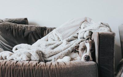 8 consejos para que tu mascota empiece la rutina con buen pie