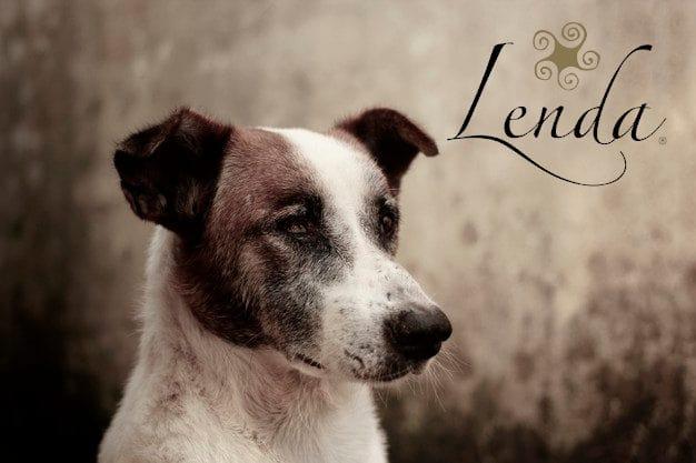 📻 La salud articular de las mascotas – Lenda en Radio Voz