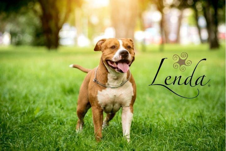 ¡La ley de perros potencialmente peligrosos podría cambiar!