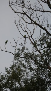 parrots sitting in a tree in the dusk