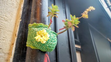 Crocheted cactus pots on rain pipes