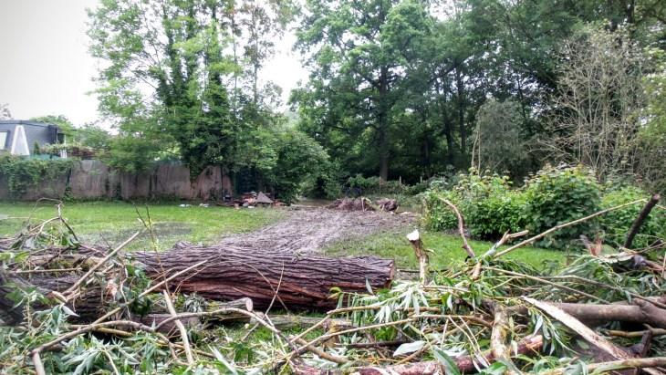 tree stumps and mud