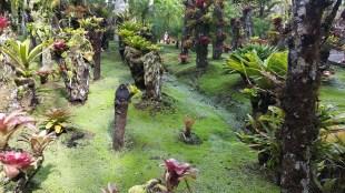 pineapple plants on tree stumps