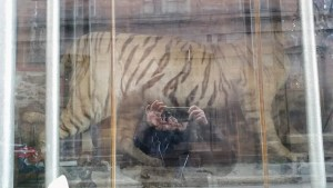 A reflecting shop window with the body of a stuffed tiger and the photographer in the window's reflection.