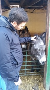 Gergö petting the donkey's head