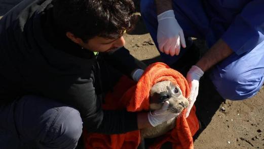 20181017-iran-kaspische-zeehond-05