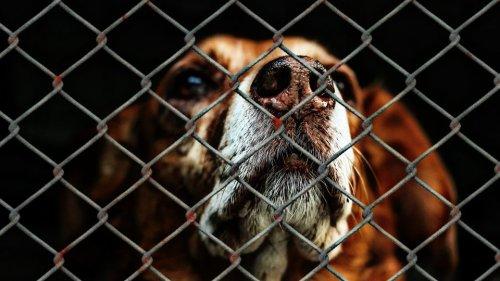 DierenLot en NFDO luiden de noodklok voor dierenhulpverlening Zorg voor dieren … Juist nu!