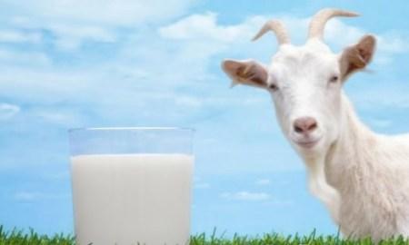 Kozie mlieko je zdravé!