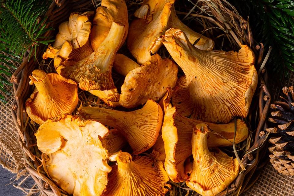 Pile Fotografieren Tipps 3 - Pilze fotografieren: 12 Tipps für den Ahh-Effekt
