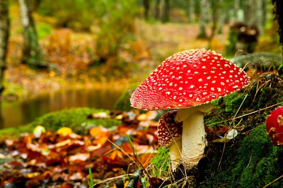 Pile Fotografieren Tipps 4 - Pilze fotografieren: 12 Tipps für den Ahh-Effekt