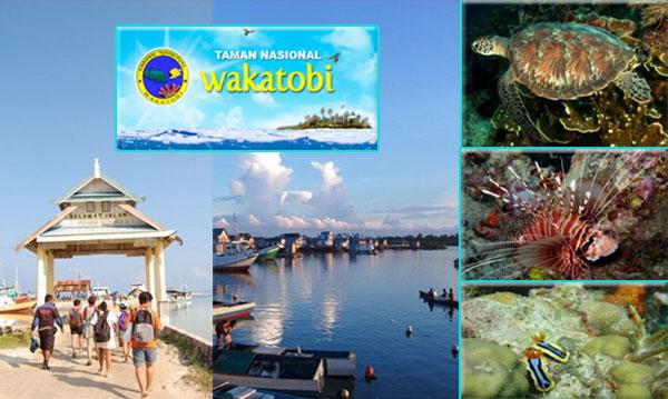 wisata-taman-nasional-wakatobi
