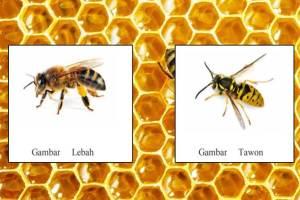 Perbedaan Tawon dan Lebah