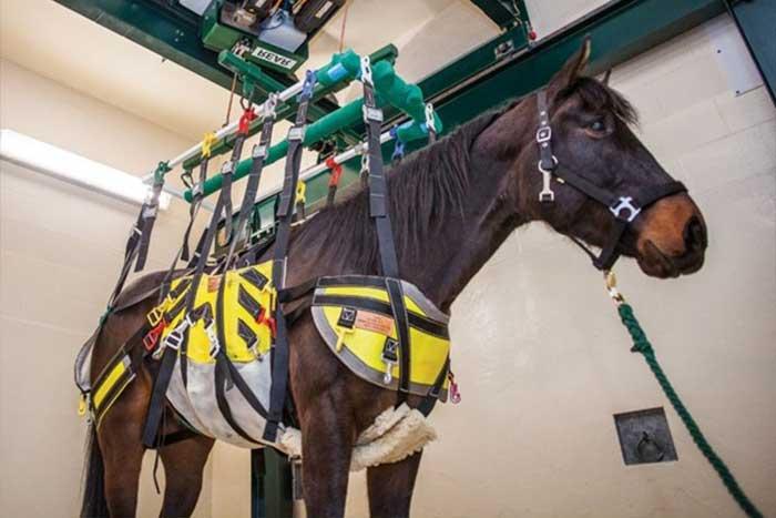 regenerasi struktur tulang kuda