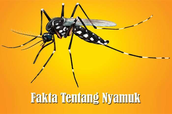 Fakta Tentang Nyamuk
