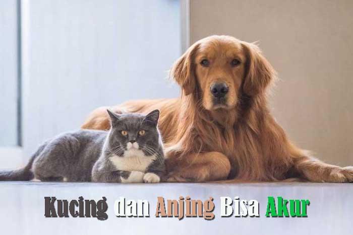 Kucing dan Anjing Tidak Bisa Akur