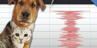 terremoto e animali