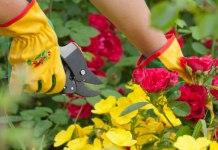 passione per il giardino