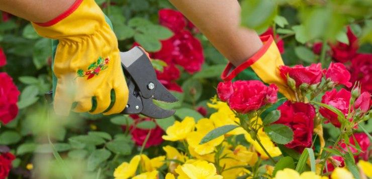 Mamme con la passione per il giardino: consigli per gli acquisti
