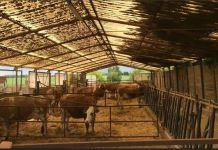 Fattoria Agricoltura Nuova