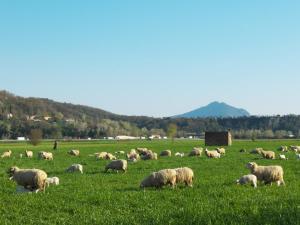 Tappa 6.Greggi di pecore nella Sabina.