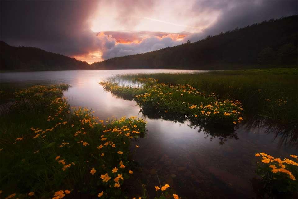 Life Pond