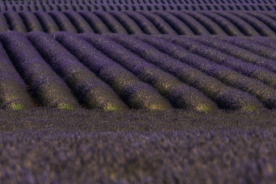Lavender Geometries