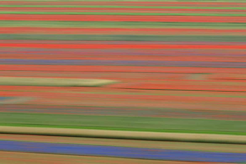 The Flower Line