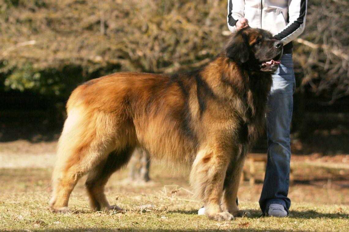 dersu 2006 2006 Big Dog Pitbull