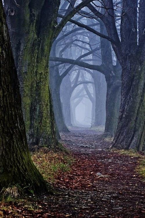 Mystical Forest, Slovakia