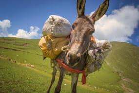 natuur sport vakantie wandelingen met ezel midden in de bergen