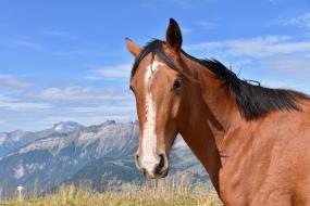 wandelen met paarden in de natuur. Sport vakantie. Midden in de bergen