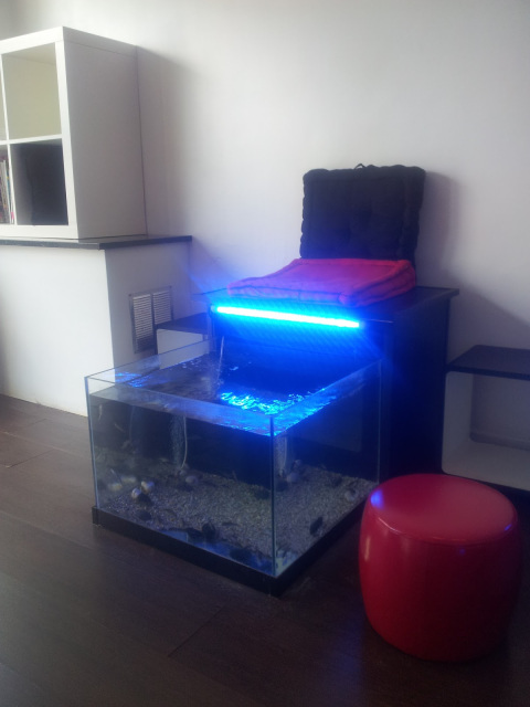 fauteuil-so-fish-spa