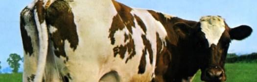 cropped-Mucca-Pink-Floyd1.jpg