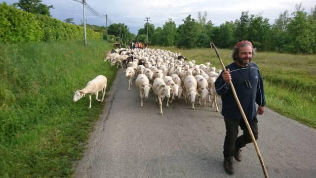 Le berger et son troupeau