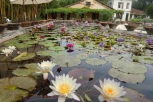 Le jardin des nénuphars de Latour Marliac